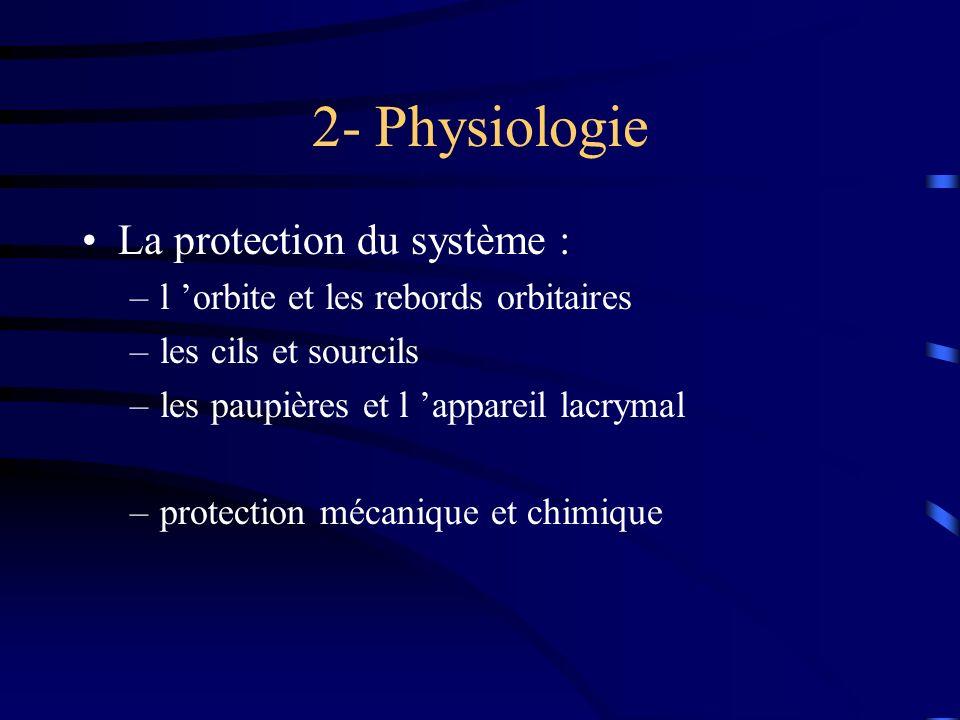 2- Physiologie La protection du système : –l orbite et les rebords orbitaires –les cils et sourcils –les paupières et l appareil lacrymal –protection