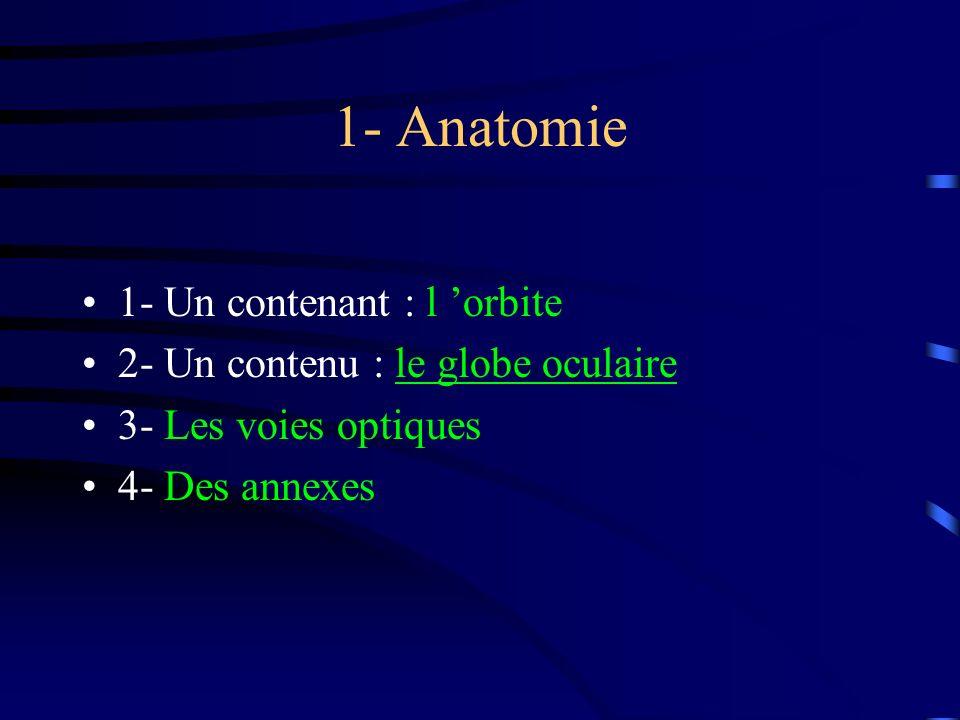 1- Anatomie 1- Un contenant : l orbite 2- Un contenu : le globe oculaire 3- Les voies optiques 4- Des annexes