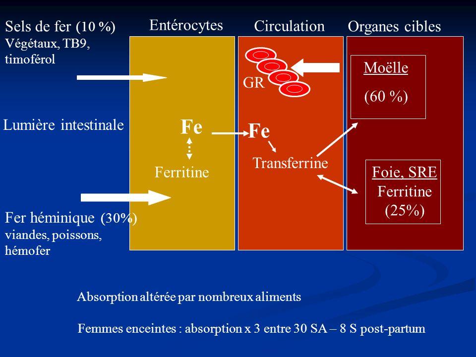 Ferritine Transferrine Foie, SRE Ferritine (25%) Entérocytes Sels de fer (10 %) Végétaux, TB9, timoférol Fer héminique (30%) viandes, poissons, hémofe