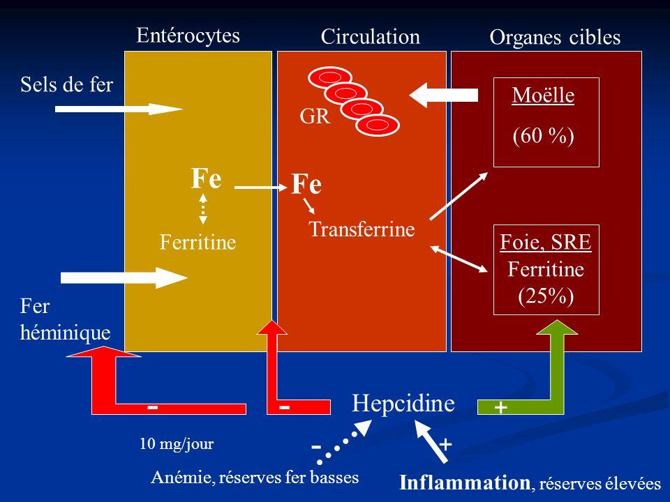 Ferritine Transferrine Foie, SRE Ferritine (25%) Entérocytes Sels de fer Fer héminique Circulation Organes cibles Moëlle (60 %) GR Hepcidine - + Fe -
