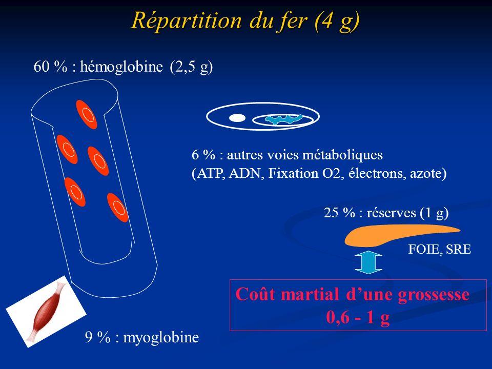 Répartition du fer (4 g) 60 % : hémoglobine (2,5 g) 9 % : myoglobine 6 % : autres voies métaboliques (ATP, ADN, Fixation O2, électrons, azote) 25 % :