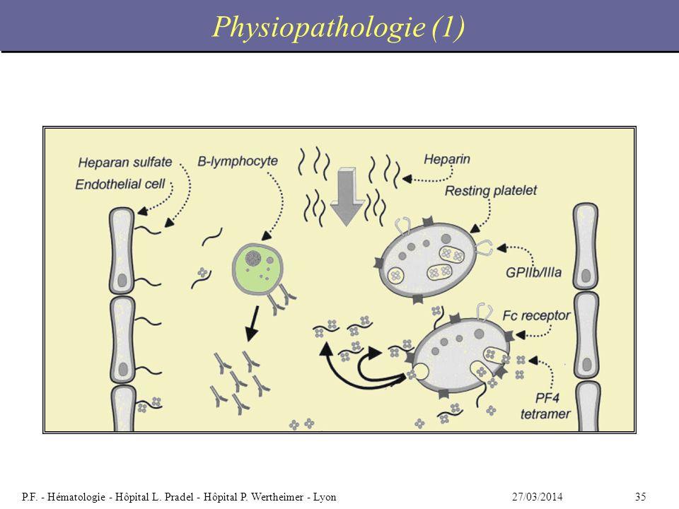 3527/03/2014P.F. - Hématologie - Hôpital L. Pradel - Hôpital P. Wertheimer - Lyon Physiopathologie (1)