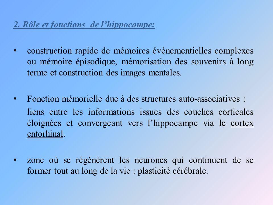 2. Rôle et fonctions de lhippocampe: construction rapide de mémoires évènementielles complexes ou mémoire épisodique, mémorisation des souvenirs à lon