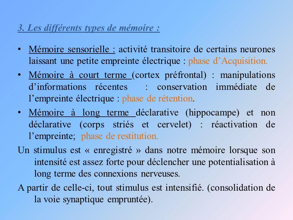 3. Les différents types de mémoire : Mémoire sensorielle : activité transitoire de certains neurones laissant une petite empreinte électrique : phase