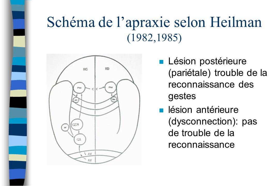 Schéma de lapraxie selon Heilman (1982,1985) n Lésion postérieure (pariétale) trouble de la reconnaissance des gestes n lésion antérieure (dysconnecti