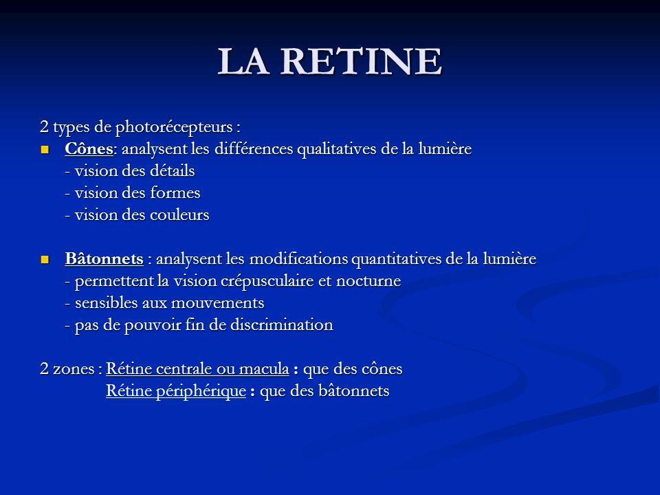 LA RETINE 2 types de photorécepteurs : Cônes: analysent les différences qualitatives de la lumière Cônes: analysent les différences qualitatives de la