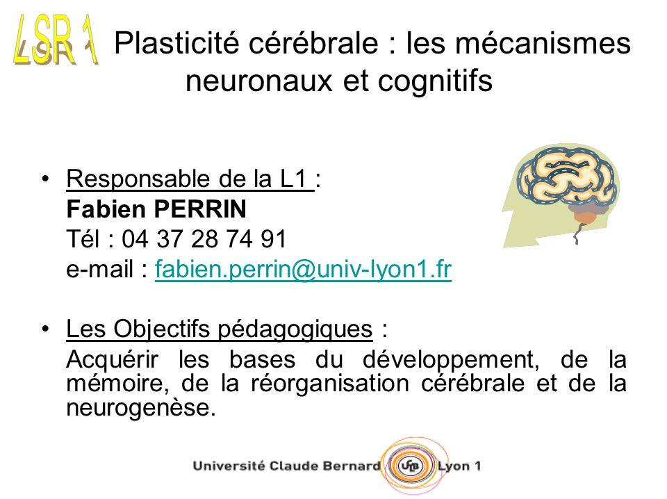 Plasticité cérébrale : les mécanismes neuronaux et cognitifs Responsable de la L1 : Fabien PERRIN Tél : 04 37 28 74 91 e-mail : fabien.perrin@univ-lyon1.frfabien.perrin@univ-lyon1.fr Les Objectifs pédagogiques : Acquérir les bases du développement, de la mémoire, de la réorganisation cérébrale et de la neurogenèse.