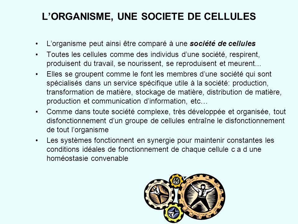 LORGANISME, UNE SOCIETE DE CELLULES Lorganisme peut ainsi être comparé à une société de cellules Toutes les cellules comme des individus dune société,