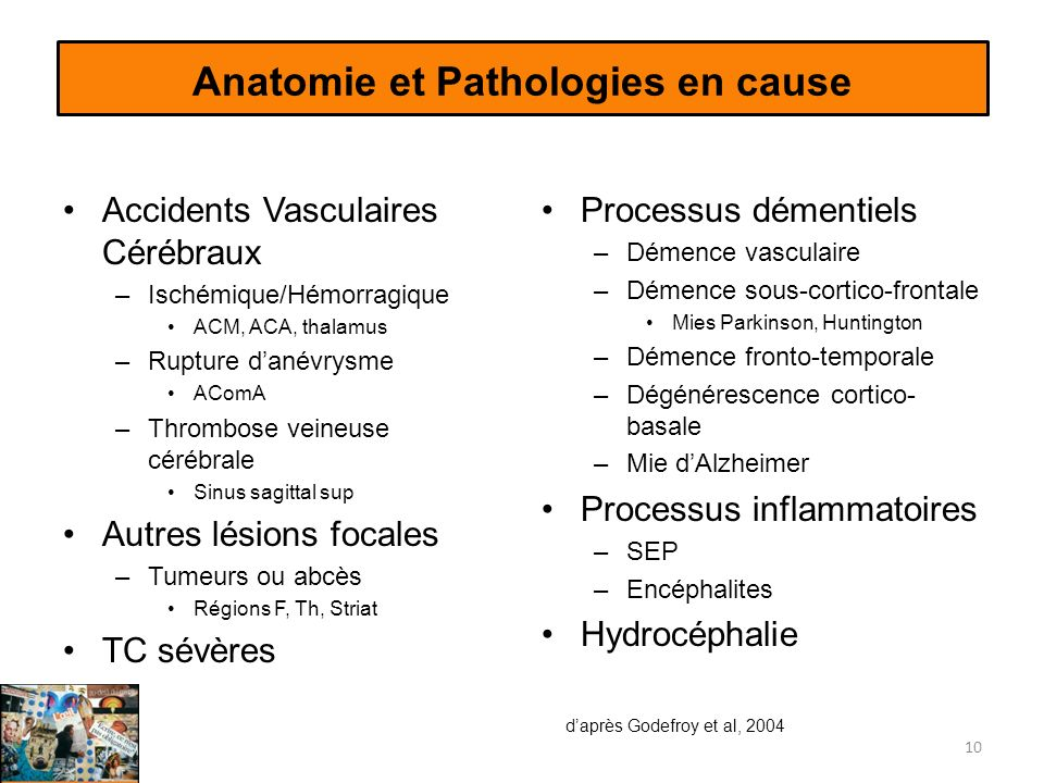 Anatomie et Pathologies en cause Accidents Vasculaires Cérébraux –Ischémique/Hémorragique ACM, ACA, thalamus –Rupture danévrysme AComA –Thrombose vein