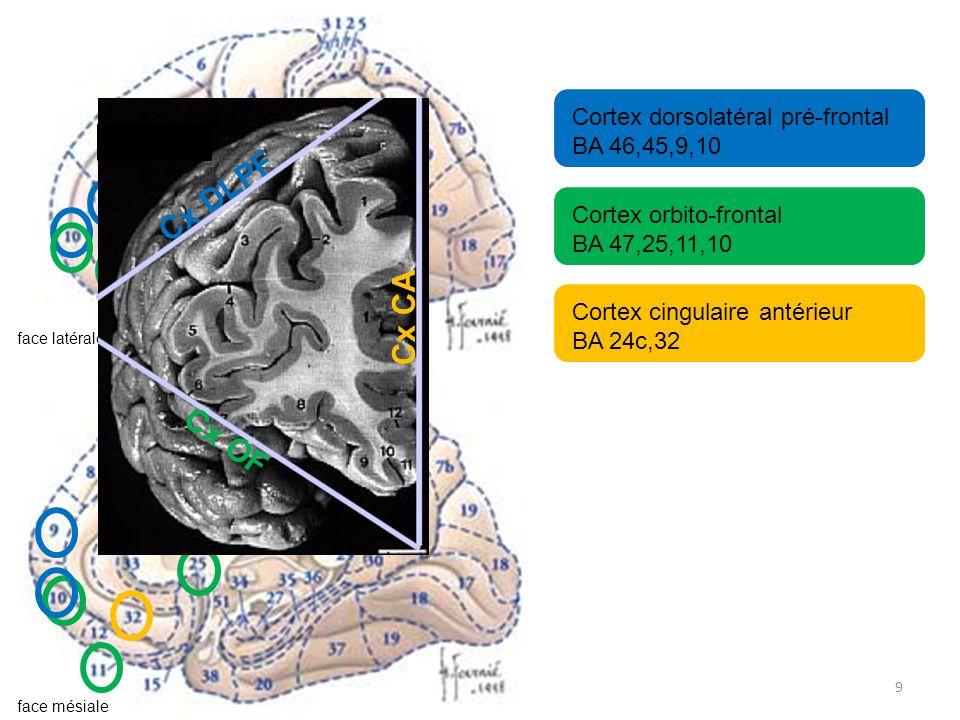 9 Cortex dorsolatéral pré-frontal BA 46,45,9,10 Cortex orbito-frontal BA 47,25,11,10 Cortex cingulaire antérieur BA 24c,32 face latérale face mésiale Cx DLPF Cx OF Cx CA