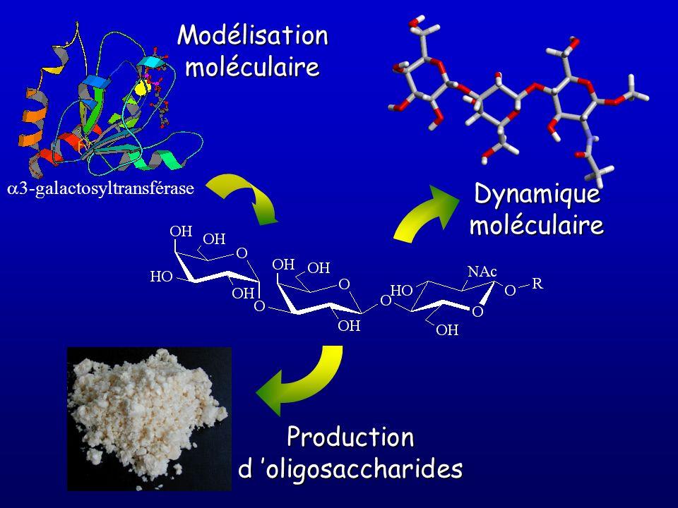 3-galactosyltransférase Modélisationmoléculaire Productiond oligosaccharides Dynamiquemoléculaire