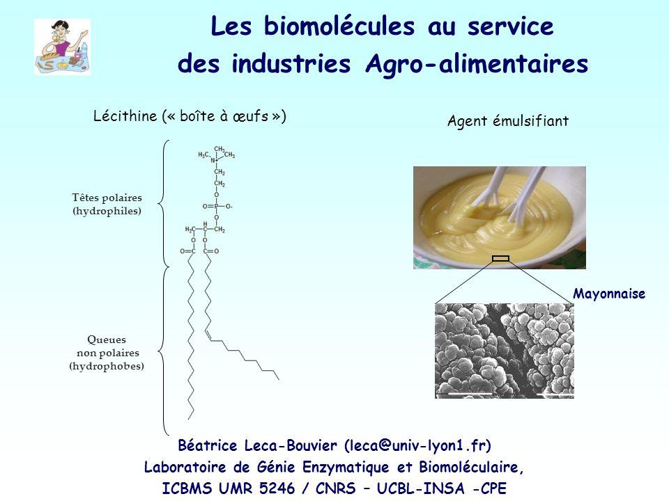 Lécithine (« boîte à œufs ») Agent émulsifiant Têtes polaires (hydrophiles) Queues non polaires (hydrophobes) Mayonnaise Les biomolécules au service d