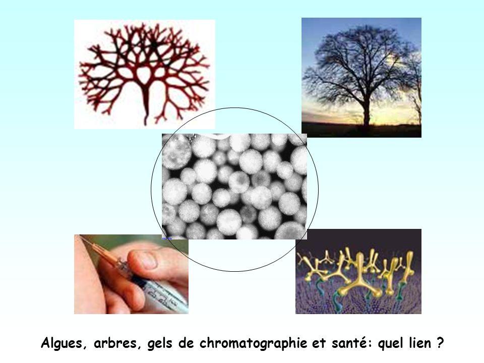Algues, arbres, gels de chromatographie et santé: quel lien ?