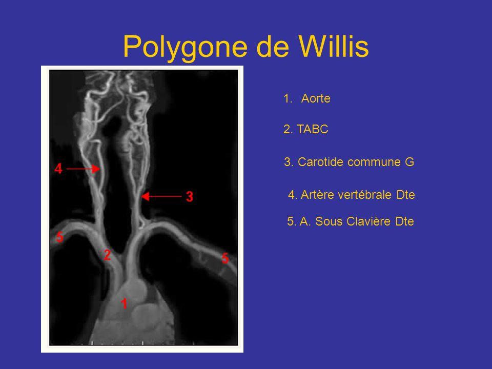 Polygone de Willis 1.Aorte 2. TABC 3. Carotide commune G 4. Artère vertébrale Dte 5. A. Sous Clavière Dte