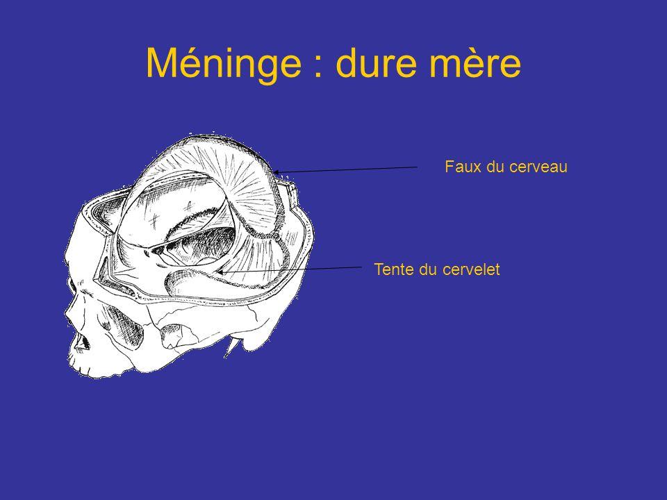 Méninge : dure mère Faux du cerveau Tente du cervelet
