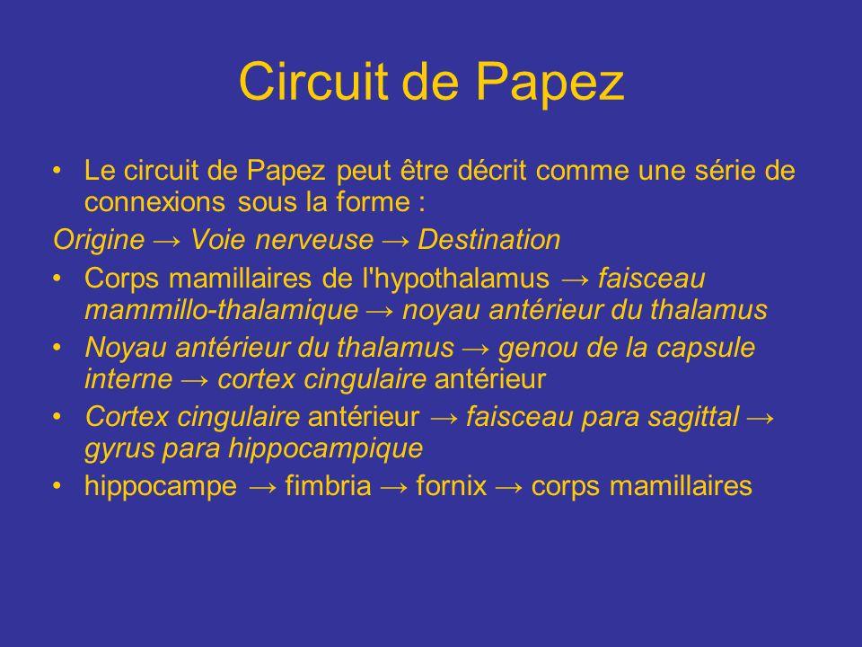 Circuit de Papez Le circuit de Papez peut être décrit comme une série de connexions sous la forme : Origine Voie nerveuse Destination Corps mamillaire