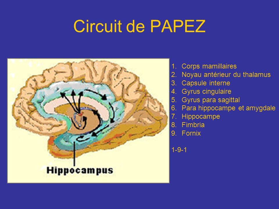 Circuit de PAPEZ 1.Corps mamillaires 2.Noyau antérieur du thalamus 3.Capsule interne 4.Gyrus cingulaire 5.Gyrus para sagittal 6.Para hippocampe et amy