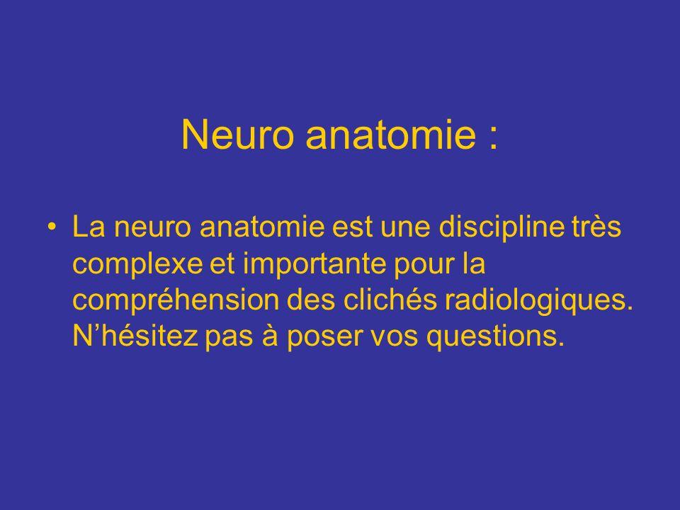 Neuro anatomie : La neuro anatomie est une discipline très complexe et importante pour la compréhension des clichés radiologiques. Nhésitez pas à pose