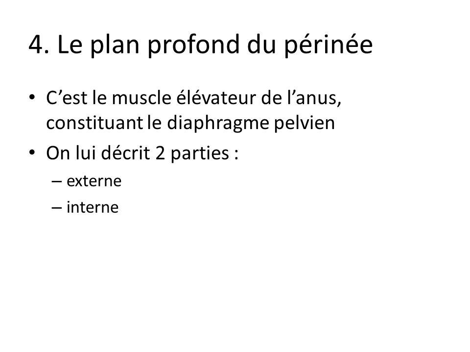 4. Le plan profond du périnée Cest le muscle élévateur de lanus, constituant le diaphragme pelvien On lui décrit 2 parties : – externe – interne
