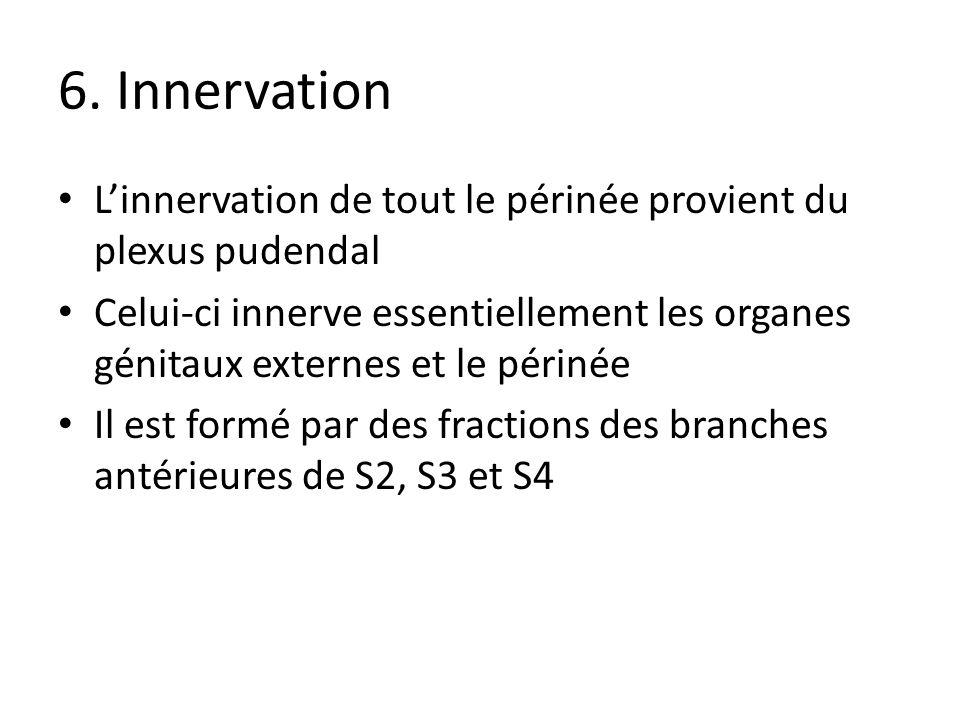 6. Innervation Linnervation de tout le périnée provient du plexus pudendal Celui-ci innerve essentiellement les organes génitaux externes et le périné
