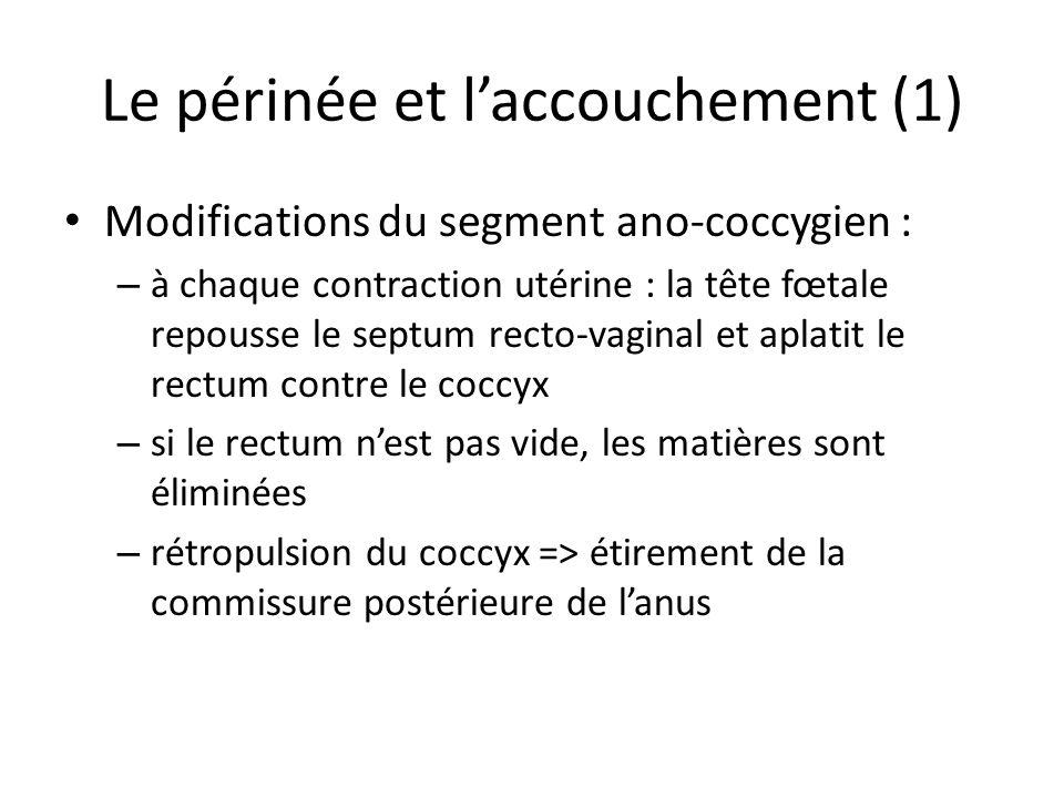 Le périnée et laccouchement (1) Modifications du segment ano-coccygien : – à chaque contraction utérine : la tête fœtale repousse le septum recto-vaginal et aplatit le rectum contre le coccyx – si le rectum nest pas vide, les matières sont éliminées – rétropulsion du coccyx => étirement de la commissure postérieure de lanus