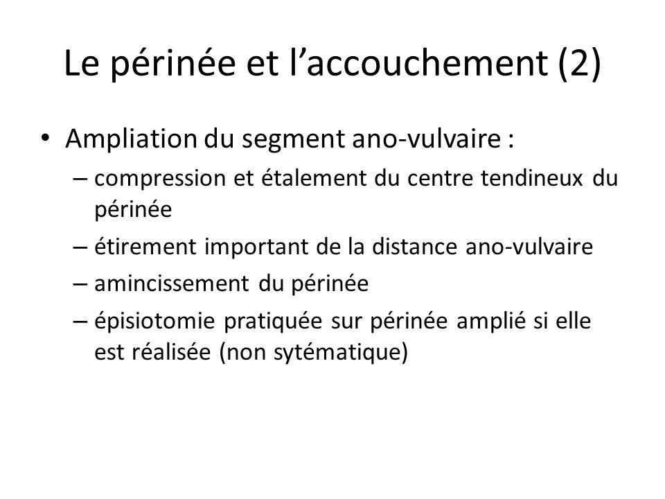 Le périnée et laccouchement (2) Ampliation du segment ano-vulvaire : – compression et étalement du centre tendineux du périnée – étirement important de la distance ano-vulvaire – amincissement du périnée – épisiotomie pratiquée sur périnée amplié si elle est réalisée (non sytématique)