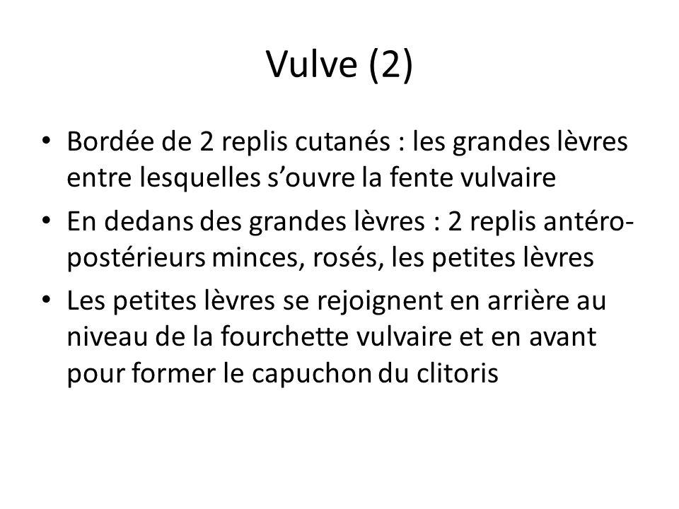 Vulve (2) Bordée de 2 replis cutanés : les grandes lèvres entre lesquelles souvre la fente vulvaire En dedans des grandes lèvres : 2 replis antéro- po