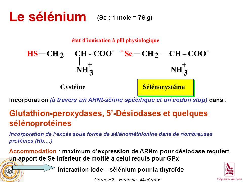 Cours P2 – Besoins - Minéraux (Se ; 1 mole = 79 g) Le sélénium Incorporation (à travers un ARNt-sérine spécifique et un codon stop) dans : Glutathion-