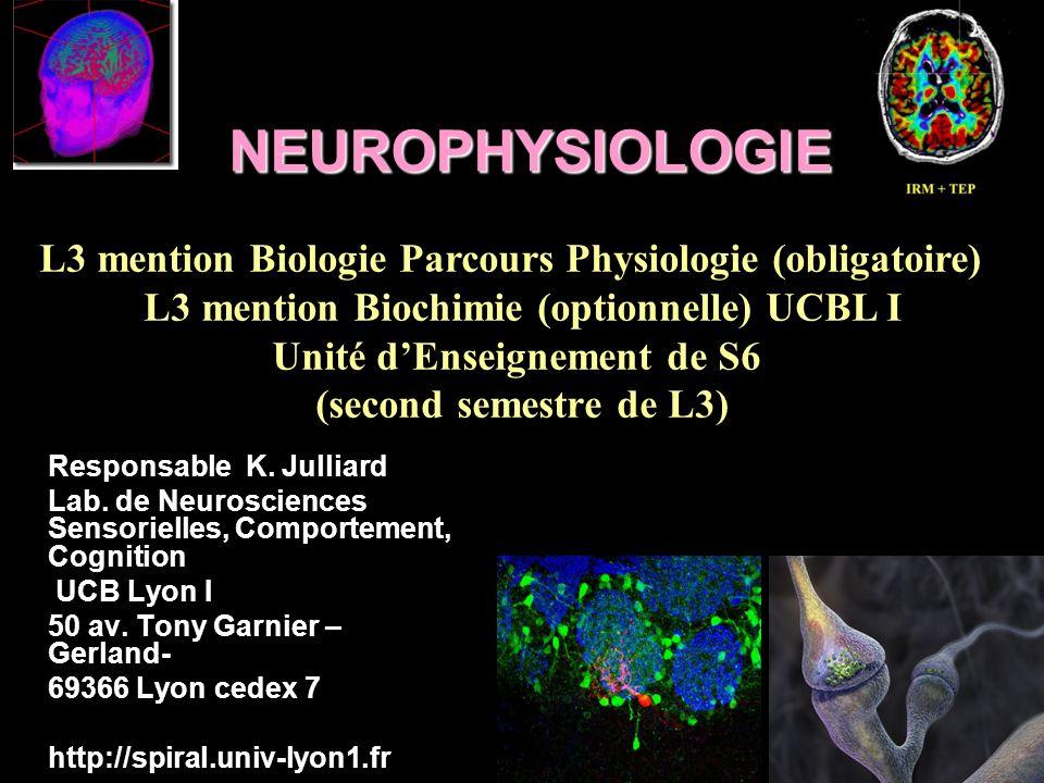 NEUROPHYSIOLOGIE Responsable K. Julliard Lab. de Neurosciences Sensorielles, Comportement, Cognition UCB Lyon I 50 av. Tony Garnier – Gerland- 69366 L