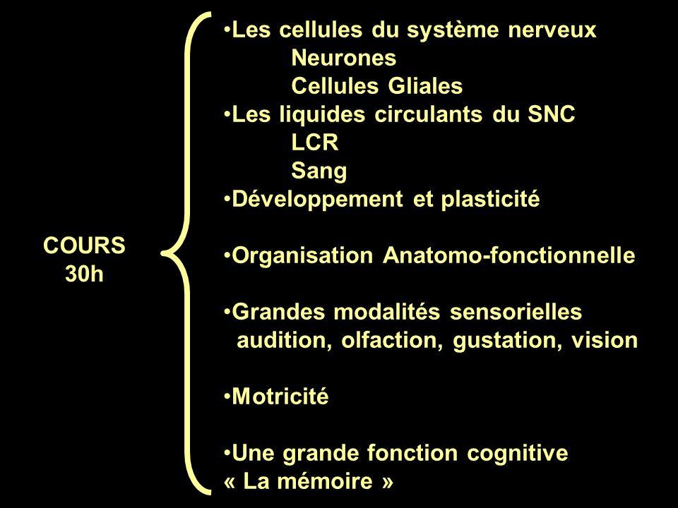 Les cellules du système nerveux Neurones Cellules Gliales Les liquides circulants du SNC LCR Sang Développement et plasticité Organisation Anatomo-fon