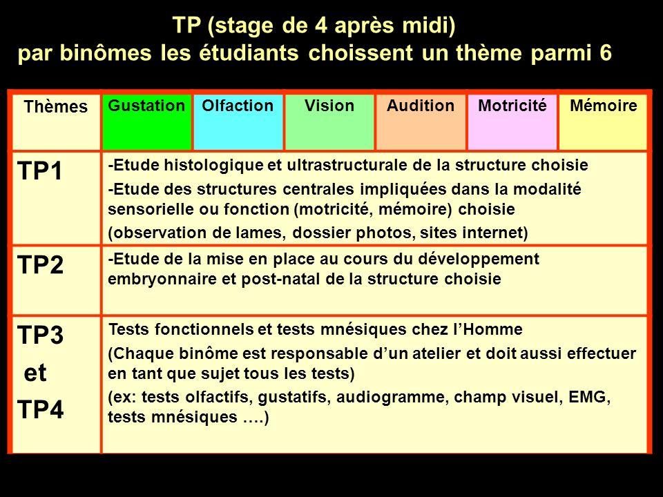 Thèmes GustationOlfactionVisionAuditionMotricitéMémoire TP1 -Etude histologique et ultrastructurale de la structure choisie -Etude des structures cent