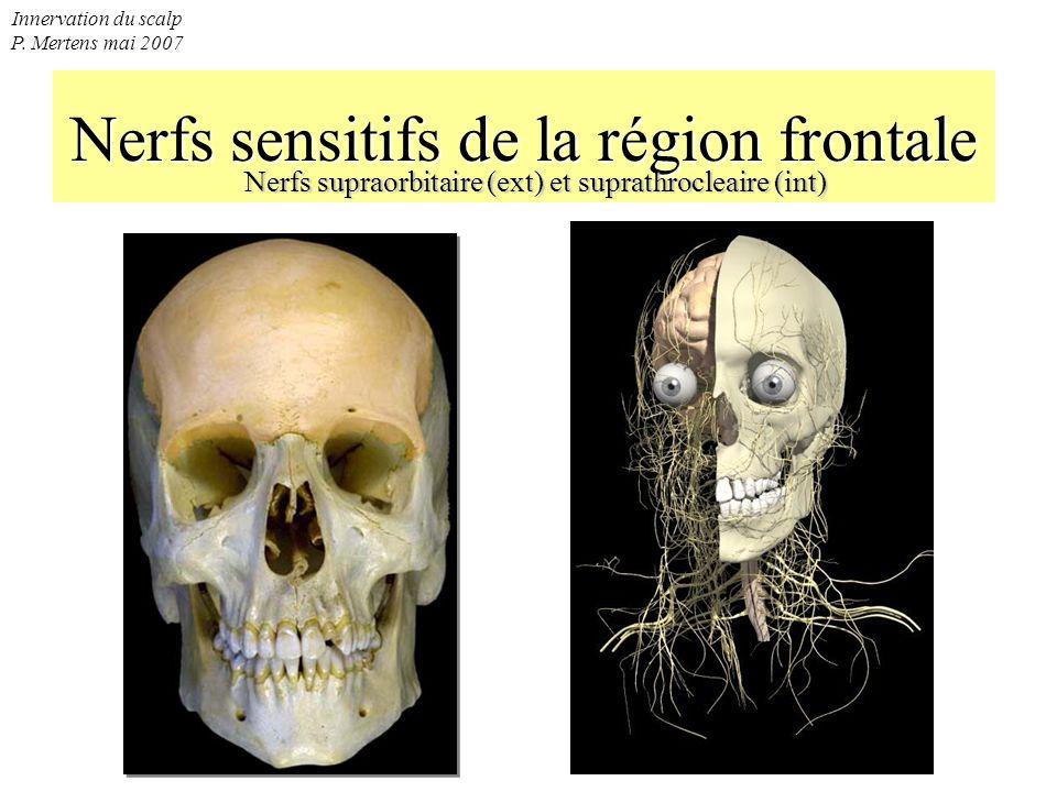 Innervation du scalp P. Mertens mai 2007 Nerfs sensitifs de la région frontale Nerfs supraorbitaire (ext) et suprathrocleaire (int)