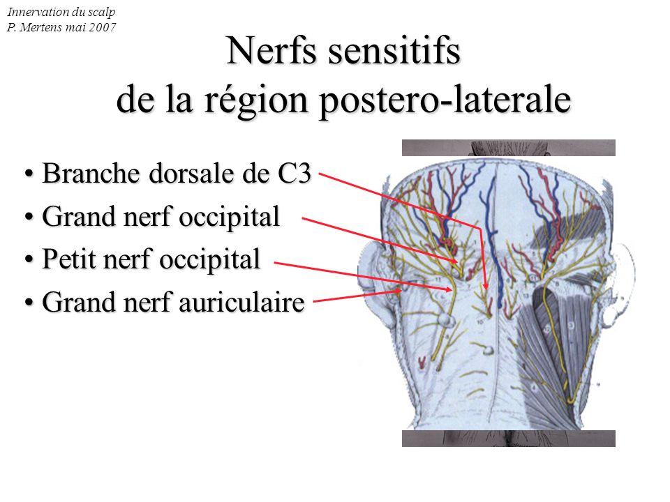 Innervation du scalp P. Mertens mai 2007 Nerfs sensitifs de la région postero-laterale Branche dorsale de C3 Branche dorsale de C3 Grand nerf occipita