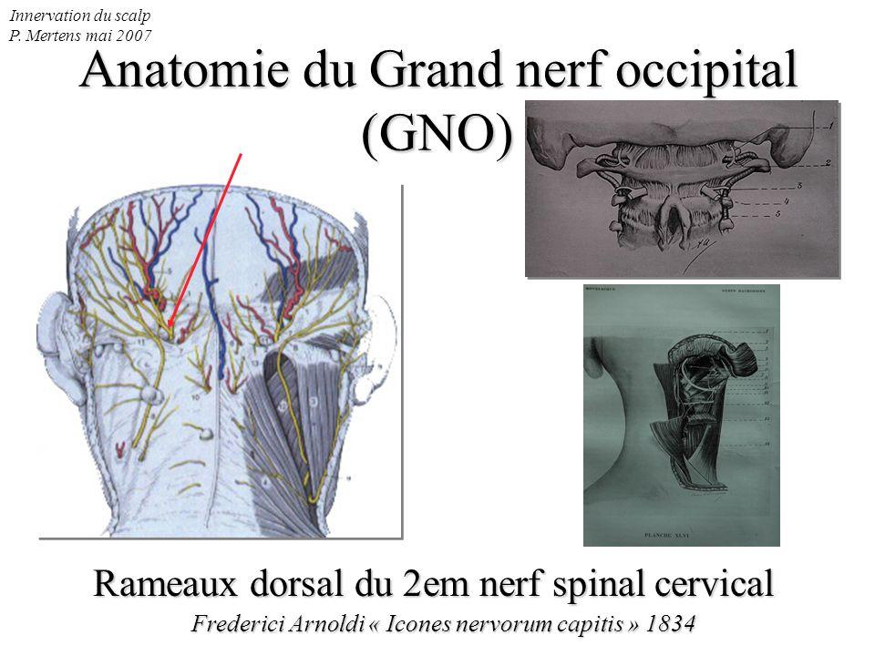 Innervation du scalp P. Mertens mai 2007 Anatomie du Grand nerf occipital (GNO) Rameaux dorsal du 2em nerf spinal cervical Frederici Arnoldi « Icones
