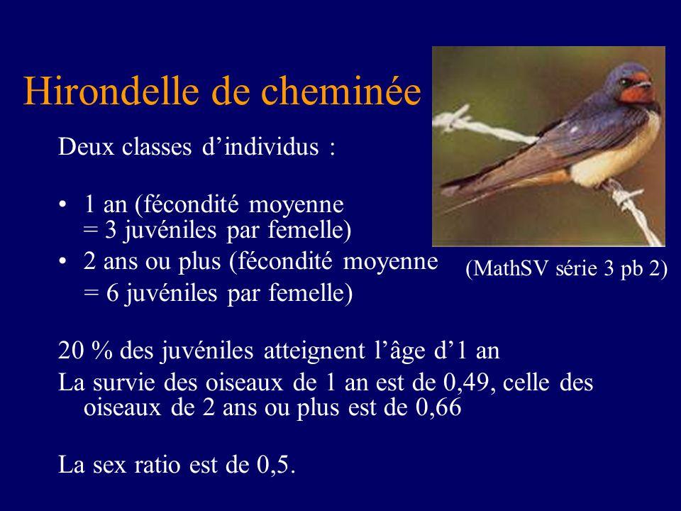 Hirondelle de cheminée Deux classes dindividus : 1 an (fécondité moyenne = 3 juvéniles par femelle) 2 ans ou plus (fécondité moyenne = 6 juvéniles par