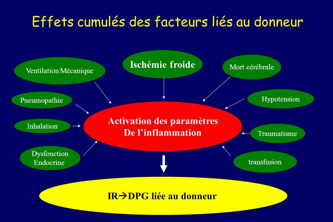Effets cumulés des facteurs liés au donneur Ischémie froide Mort cérébrale Activation des paramètres De linflammation Ventilation Mécanique Hypotensio