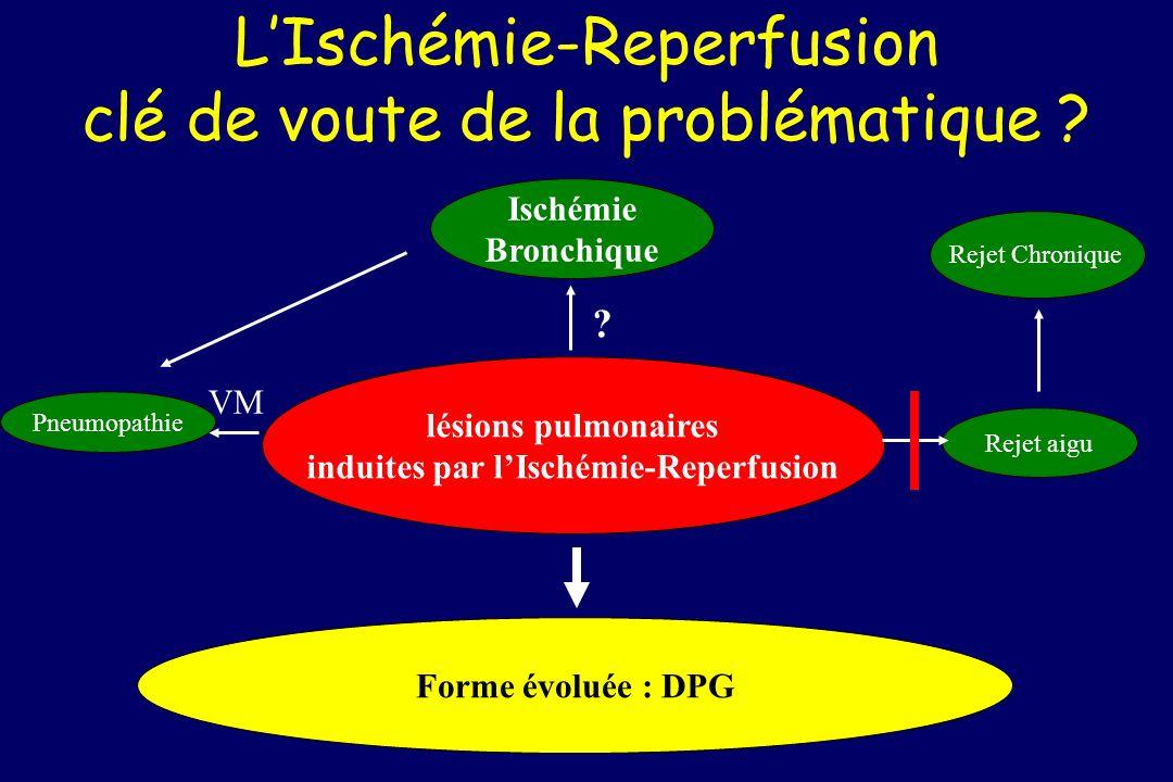 LIschémie-Reperfusion clé de voute de la problématique ? Ischémie Bronchique lésions pulmonaires induites par lIschémie-Reperfusion Rejet aigu Pneumop