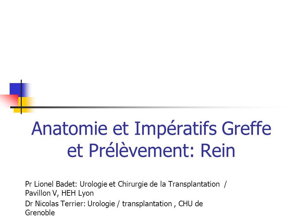Anatomie et Impératifs Greffe et Prélèvement: Rein Pr Lionel Badet: Urologie et Chirurgie de la Transplantation / Pavillon V, HEH Lyon Dr Nicolas Terr