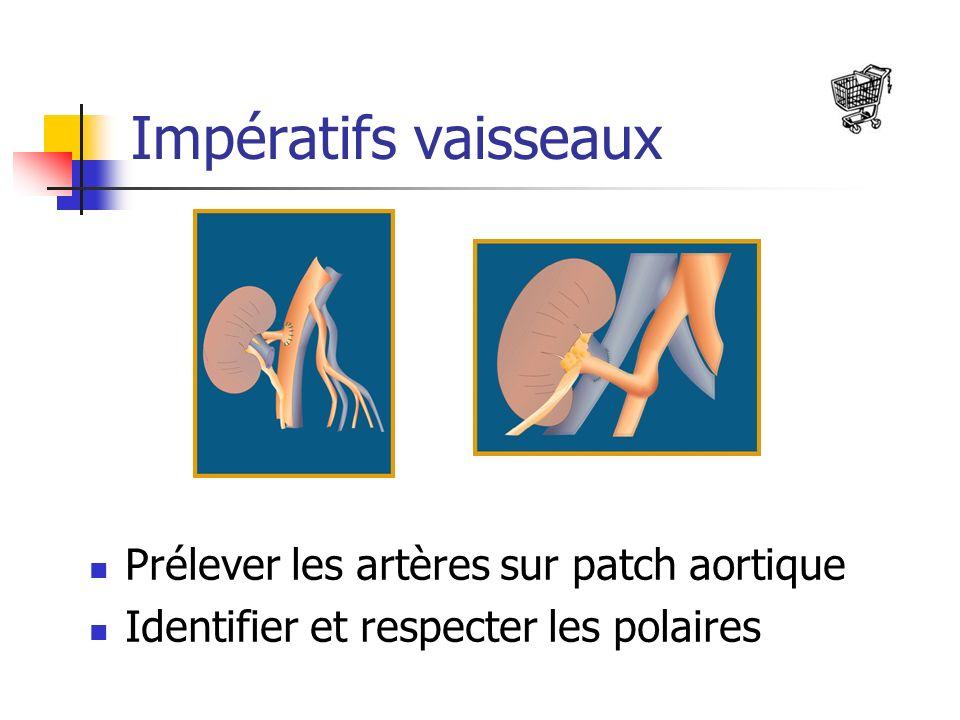 Impératifs vaisseaux Prélever les artères sur patch aortique Identifier et respecter les polaires