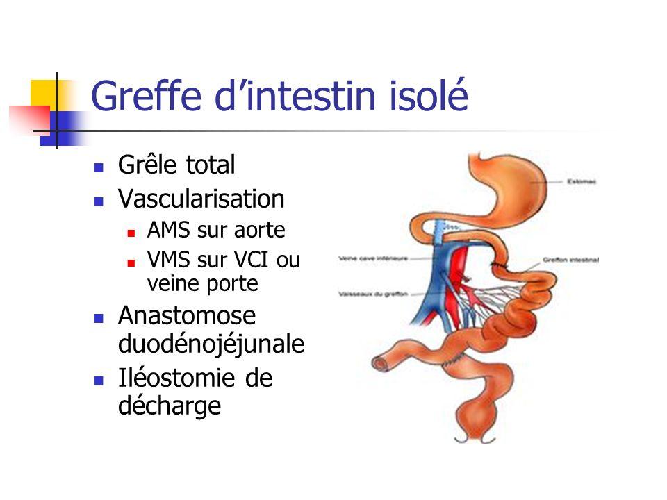 Greffe dintestin isolé Grêle total Vascularisation AMS sur aorte VMS sur VCI ou veine porte Anastomose duodénojéjunale Iléostomie de décharge