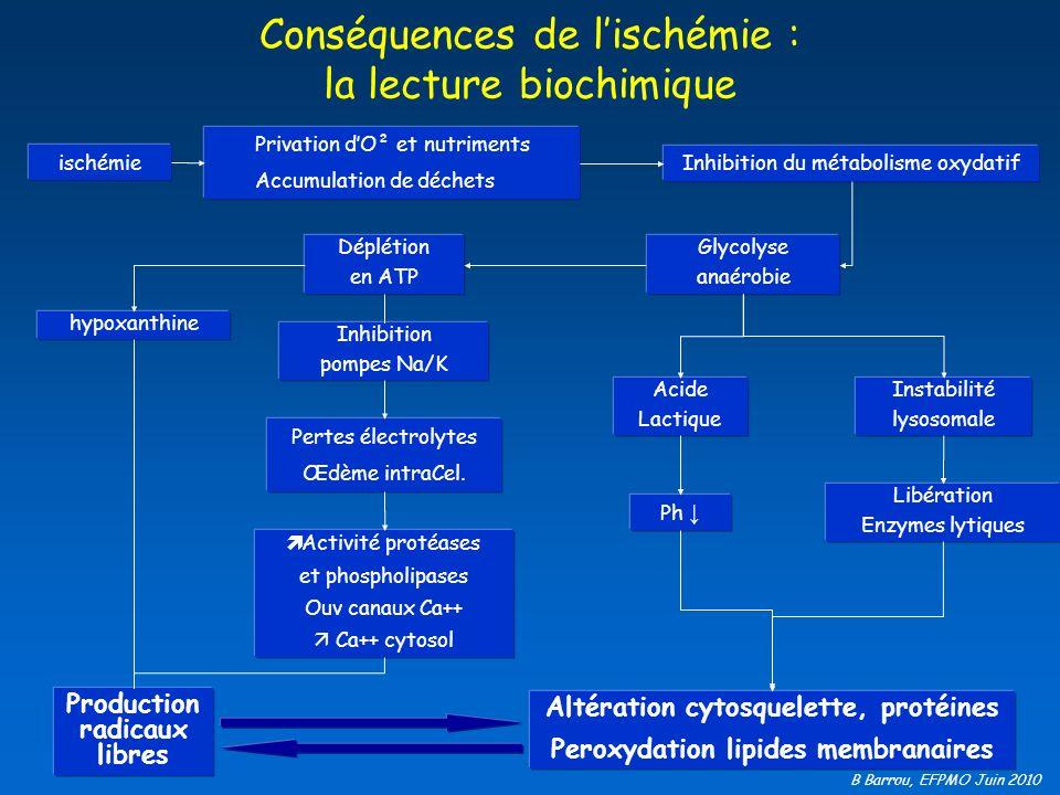 B Barrou, EFPMO Juin 2010 Conséquences de lischémie : la lecture biochimique ischémie Privation dO² et nutriments Accumulation de déchets Inhibition d