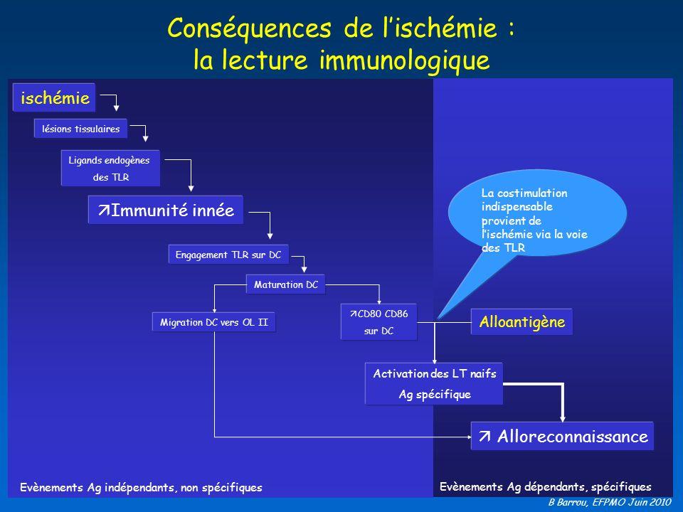 B Barrou, EFPMO Juin 2010 Conséquences de lischémie : la lecture immunologique Ligands endogènes des TLR ischémie Immunité innée Alloreconnaissance lé