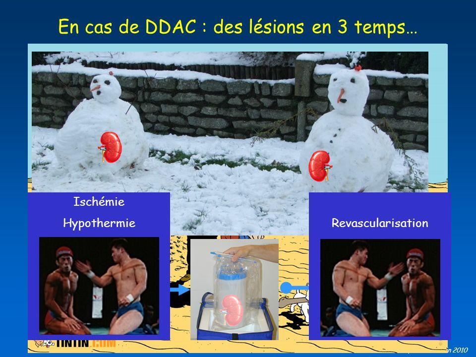 B Barrou, EFPMO Juin 2010 En cas de DDAC : des lésions en 3 temps… Ischémie HypothermieRevascularisation