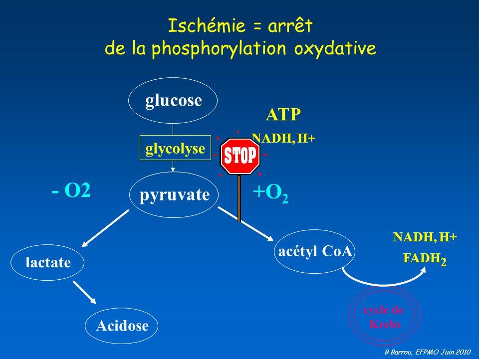B Barrou, EFPMO Juin 2010 Ischémie = arrêt de la phosphorylation oxydative - O2 lactate glucose glycolyse pyruvate ATP +O 2 NADH, H+ acétyl CoA cycle