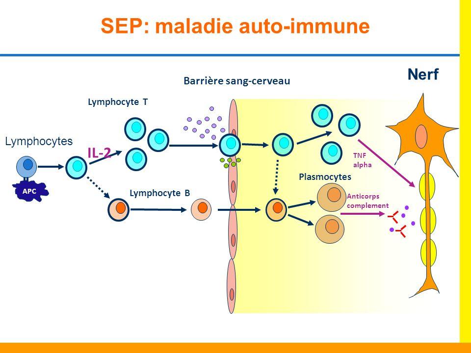 SEP: maladie auto-immune Barrière sang-cerveau APC Lymphocyte B TNF alpha Plasmocytes Anticorps complement IL-2 Lymphocytes Lymphocyte T Nerf