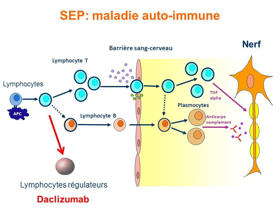 SEP: maladie auto-immune Barrière sang-cerveau APC Lymphocyte B TNF alpha Plasmocytes Anticorps complement Lymphocytes Lymphocyte T Nerf Lymphocytes r