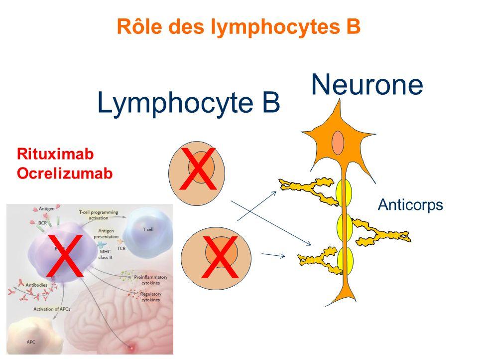 Rôle des lymphocytes B Lymphocyte B Neurone Anticorps Rituximab Ocrelizumab X X X