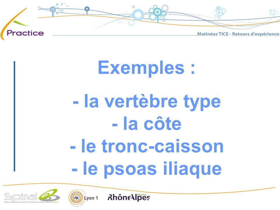 Exemples : - la vertèbre type - la côte - le tronc-caisson - le psoas iliaque