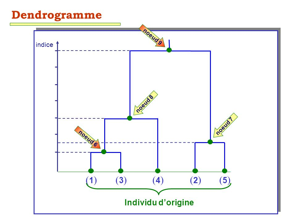 38 (1)(1)(3)(3)(4)(4)(2)(2)(5)(5) Individu dorigine indice Dendrogramme noeud 6 noeud 7 noeud 9 noeud 8
