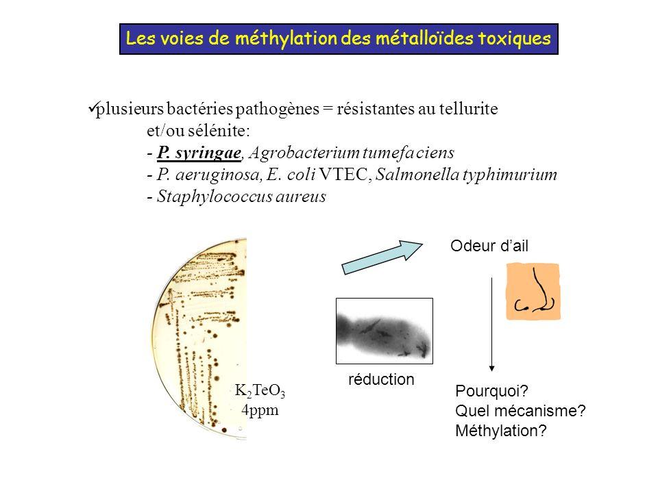 Les voies de méthylation des métalloïdes toxiques Identification de la bTPMT (Cournoyer, 1996) P.